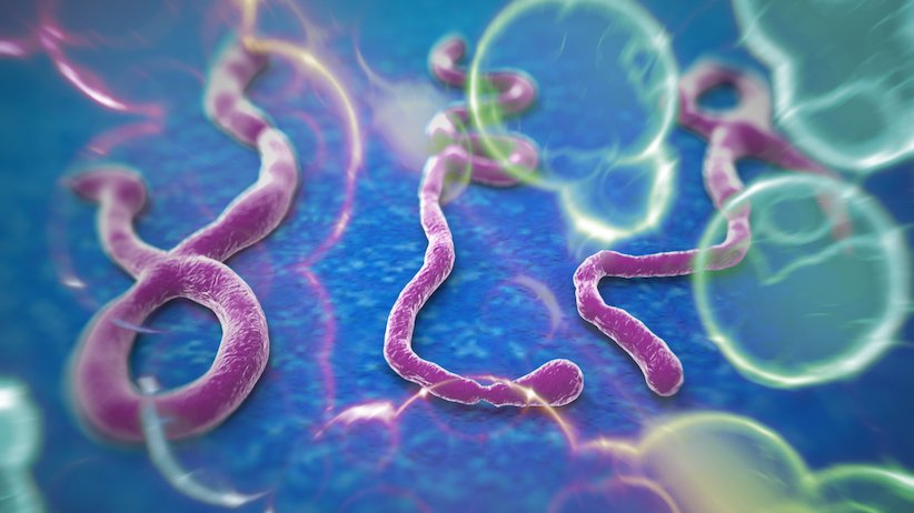Ebola may not be IT's fault, but maybe it's IP's fault?