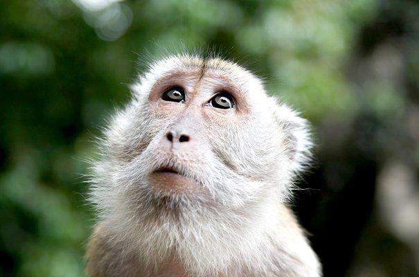 Monkey Mind at Work