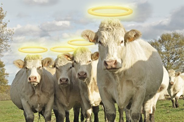 Herding Your Sacred Cows