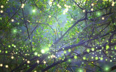 Finding Your Organization's Magic Pixie Dust